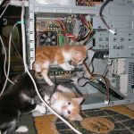 Interns are working hard to fix computer problems on National Cat Day