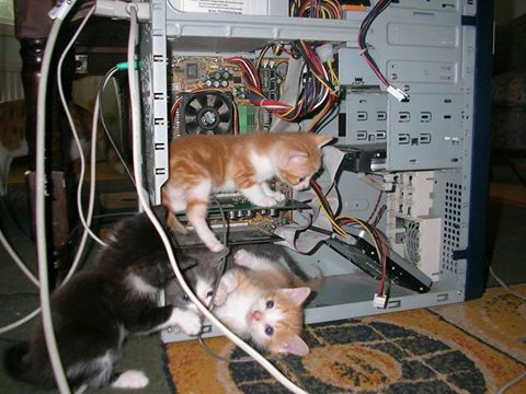 Kittens working on computer