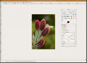 GIMP in Action Under Ubuntu Linux