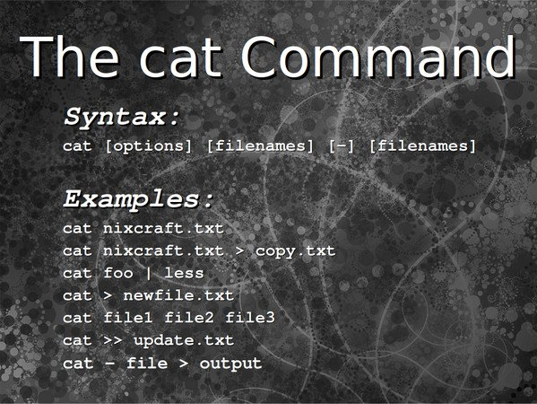 The cat command examples usage for linux unix users