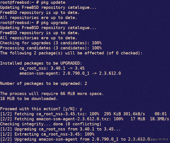 FreeBSD Applying Security Updates Using pkg command line